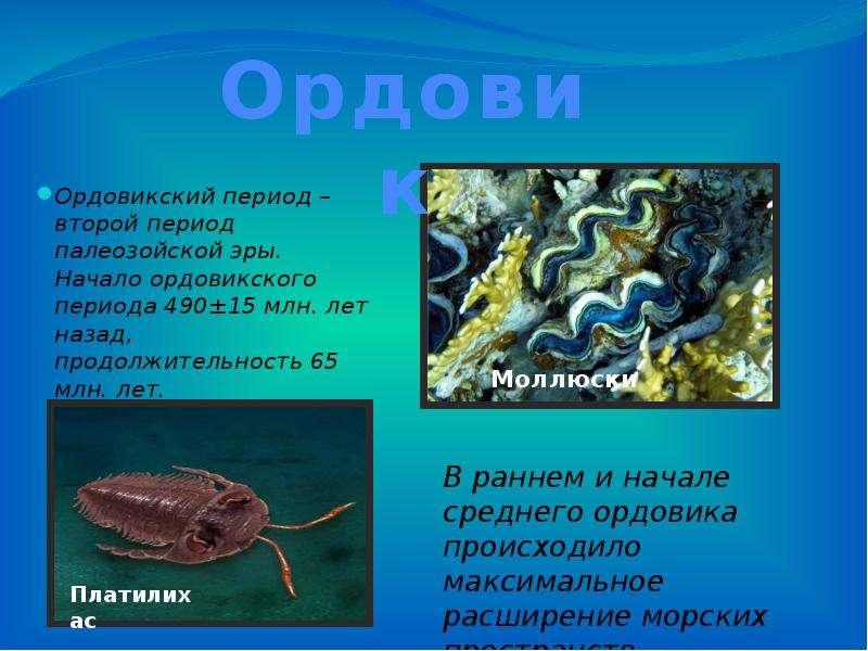 Ордовикский период – второй период палеозойской эры. Начало ордовикского периода 490±15 млн. лет наз