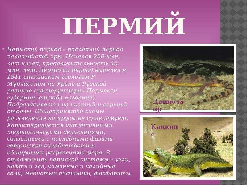 Пермий Пермский период – последний период палеозойской эры. Начался 280 млн. лет назад, продолжитель