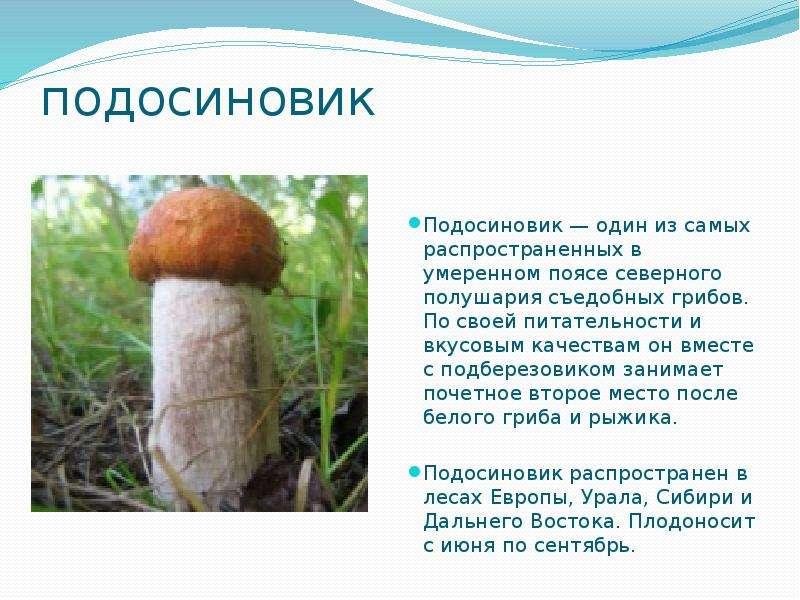 подосиновик Подосиновик — один из самых распространенных в умеренном поясе северного полушария съедо