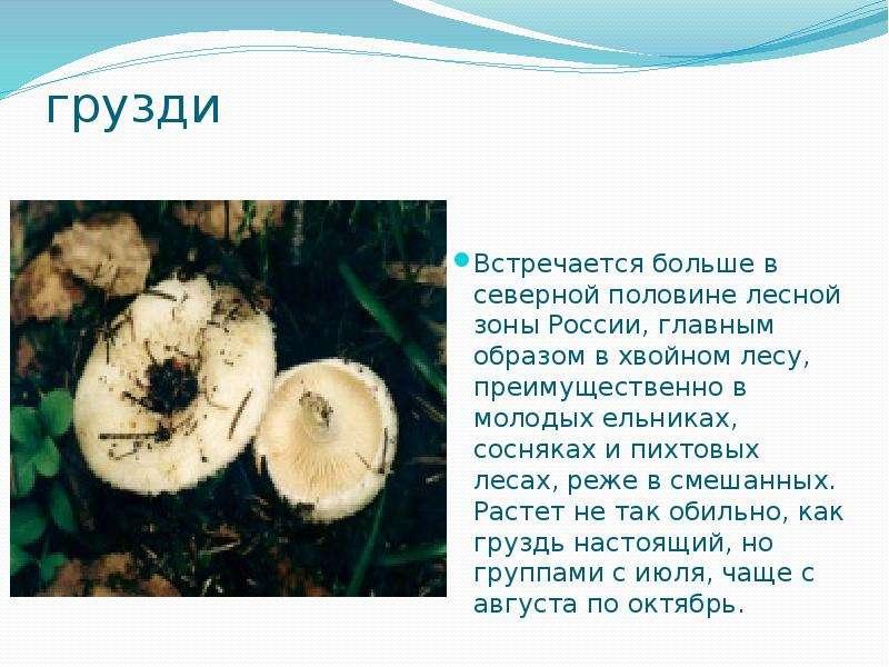 грузди Встречается больше в северной половине лесной зоны России, главным образом в хвойном лесу, пр