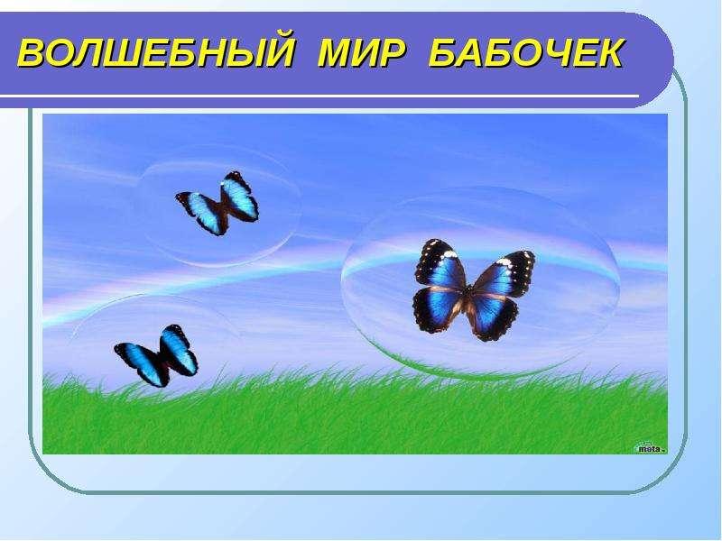 Презентация Волшебный мир бабочек