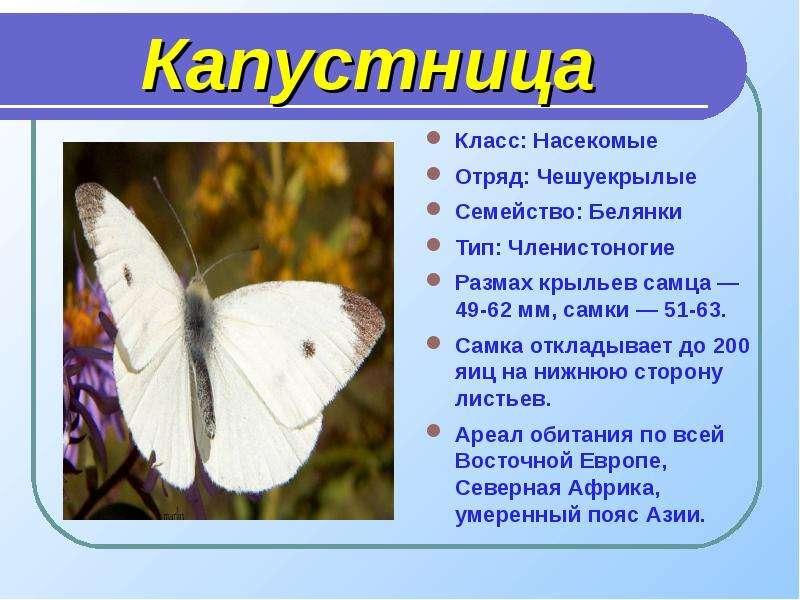 Волшебный мир бабочек, рис. 4