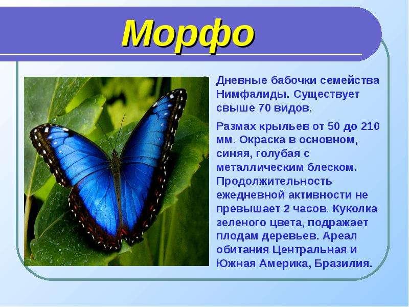 Морфо