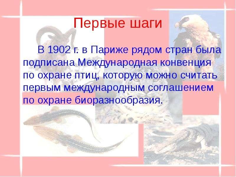 Первые шаги В 1902 г. в Париже рядом стран была подписана Международная конвенция по охране птиц, ко