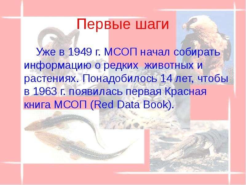 Первые шаги Уже в 1949 г. МСОП начал собирать информацию о редких животных и растениях. Понадобилось
