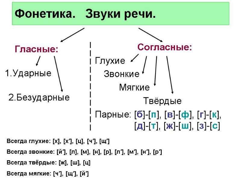 Что изучает орфография, слайд 15