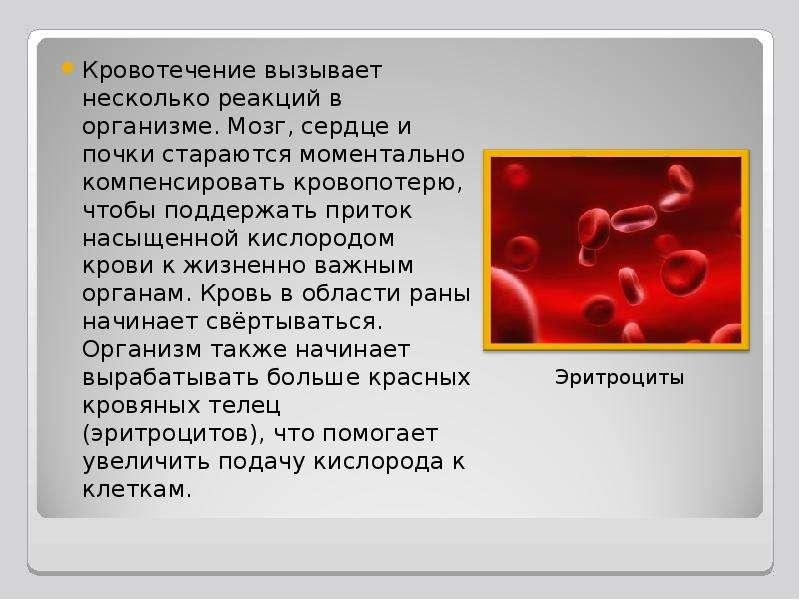 Кровотечение вызывает несколько реакций в организме. Мозг, сердце и почки стараются моментально комп