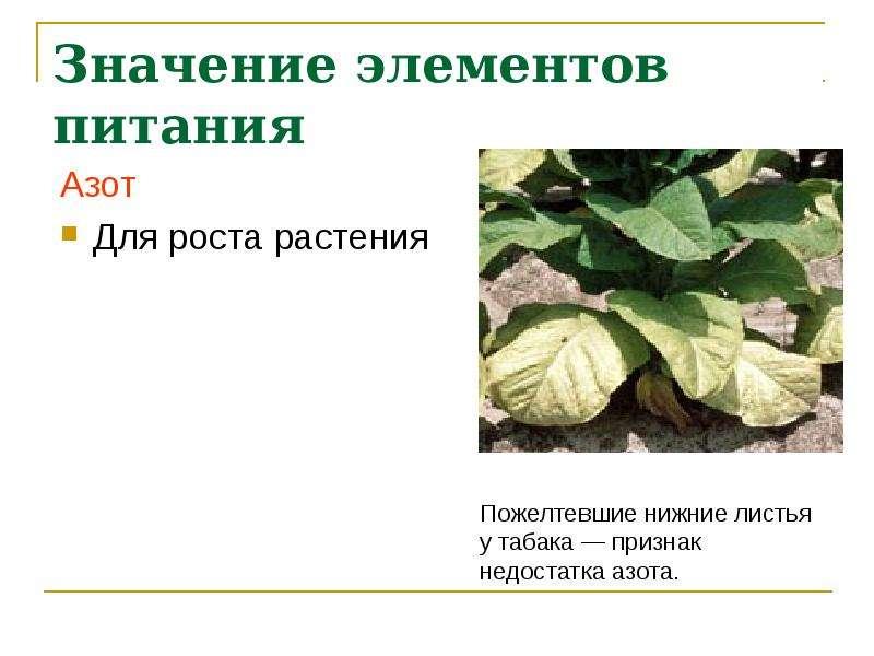 Значение элементов питания Азот Для роста растения