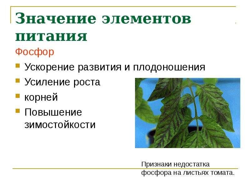 Значение элементов питания Фосфор Ускорение развития и плодоношения Усиление роста корней Повышение