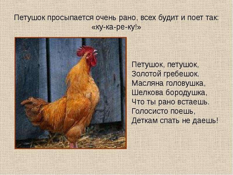 Стихи про куриц, цыплят, петухов - Детский портал «СОЛНЫШКО