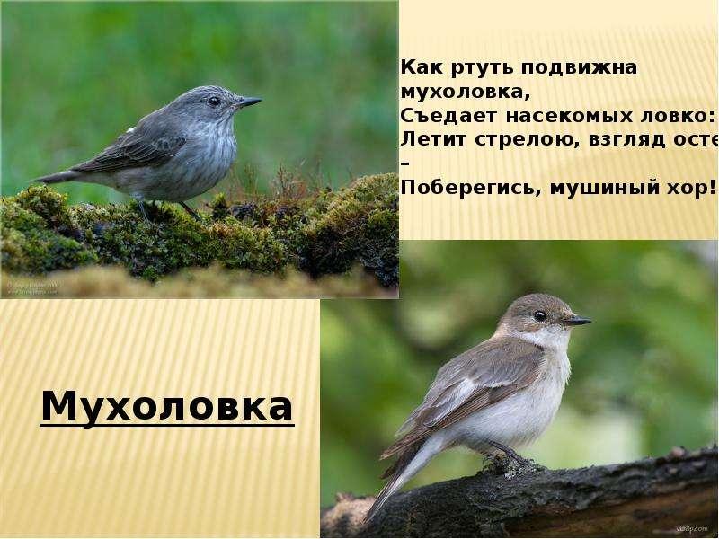скачать песню летят перелетные птицы