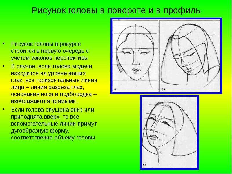 Рисунок головы в повороте и в профиль Рисунок головы в ракурсе строится в первую очередь с учетом за