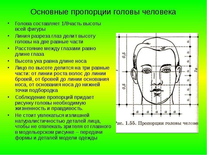 Основные пропорции головы человека Голова составляет 1/8часть высоты всей фигуры Линия разреза глаз