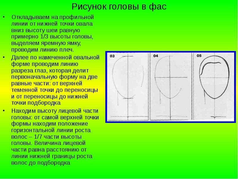 Рисунок головы в фас Откладываем на профильной линии от нижней точки овала вниз высоту шеи равную пр