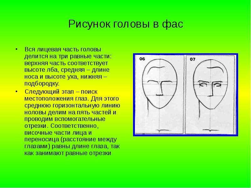 Рисунок головы в фас Вся лицевая часть головы делится на три равные части: верхняя часть соответству