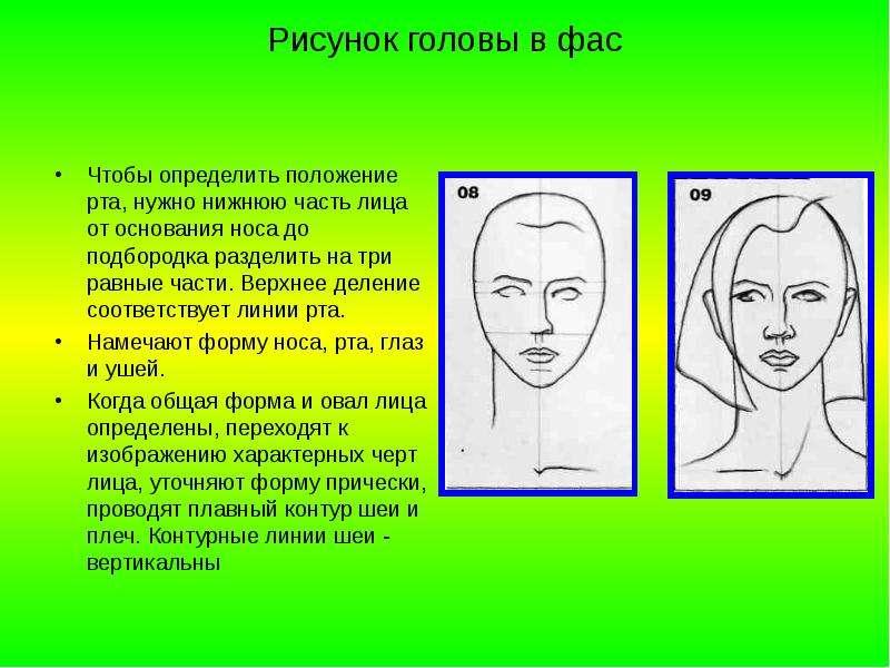 Рисунок головы в фас Чтобы определить положение рта, нужно нижнюю часть лица от основания носа до по