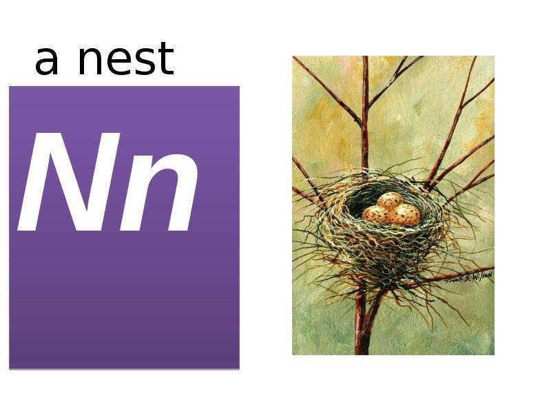 a nest Nn