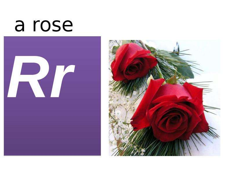 a rose Rr