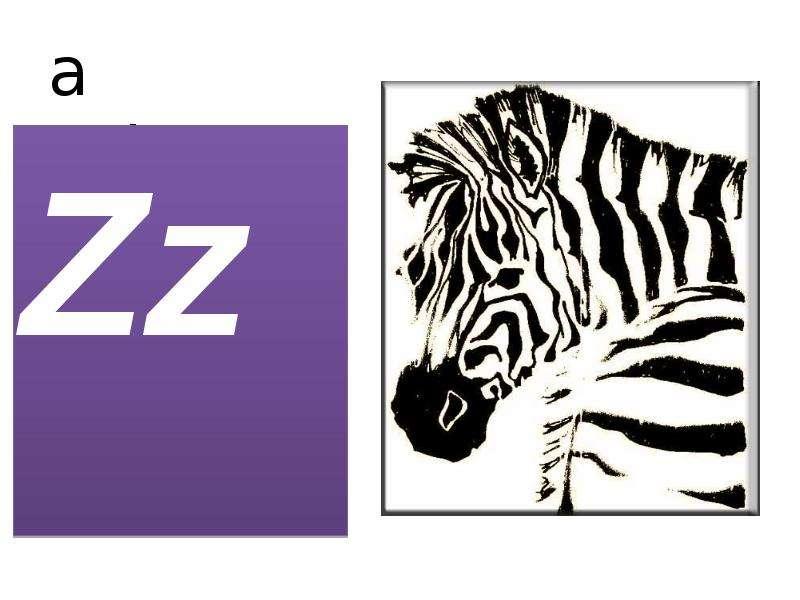 a zebra Zz