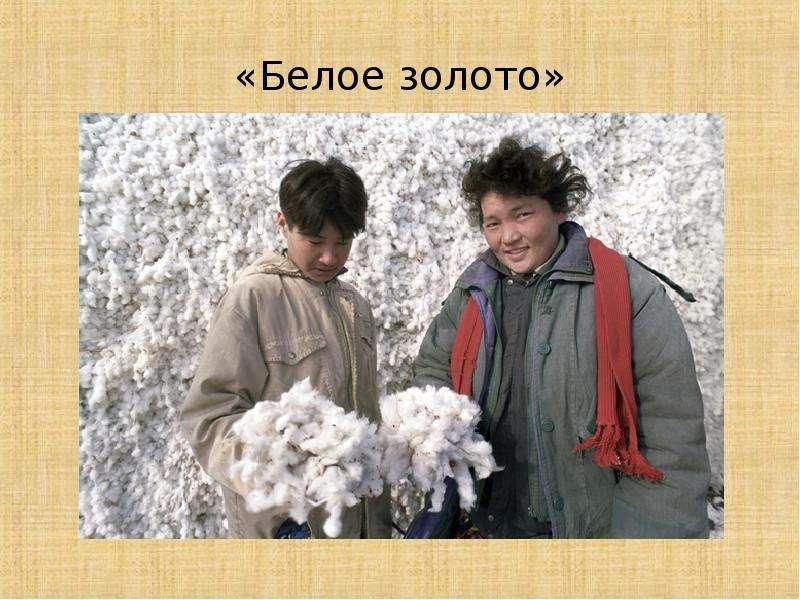 «Белое золото»