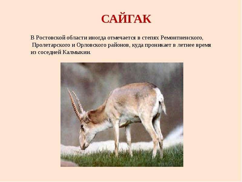 Рисунок животные красной книги ростовской области