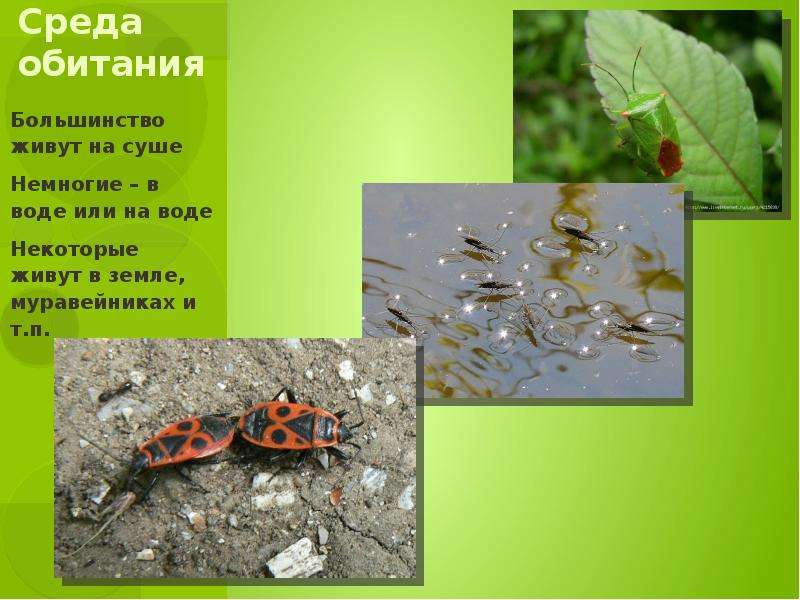 Среда обитания Большинство живут на суше Немногие – в воде или на воде Некоторые живут в земле, мура