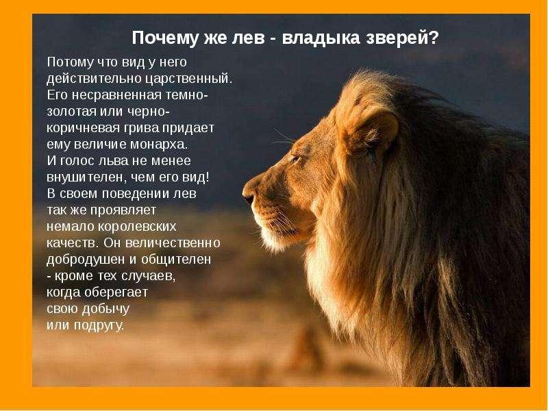 растет к чему снится что тебя хочет съесть лев это