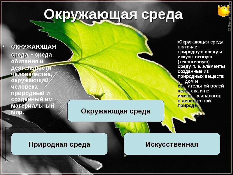 Окружающая среда ОКРУЖАЮЩАЯ среда - среда обитания и деятельности человечества, окружающий человека