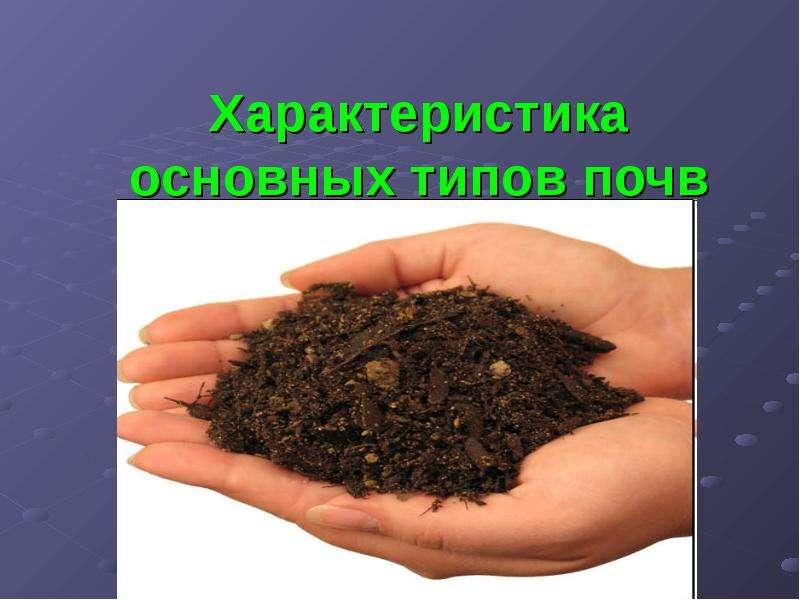 soil diversity essay