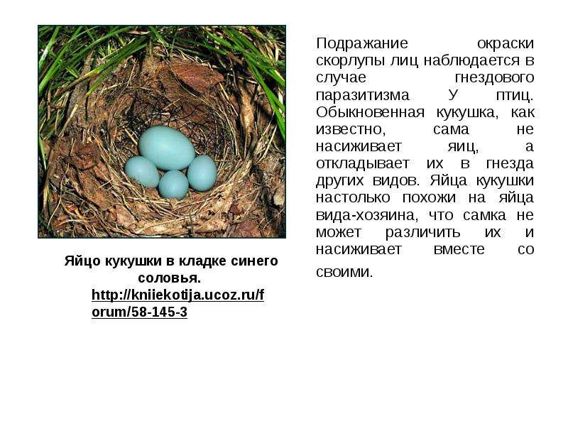 Подражание окраски скорлупы лиц наблюдается в случае гнездового паразитизма У птиц. Обыкновенная кук