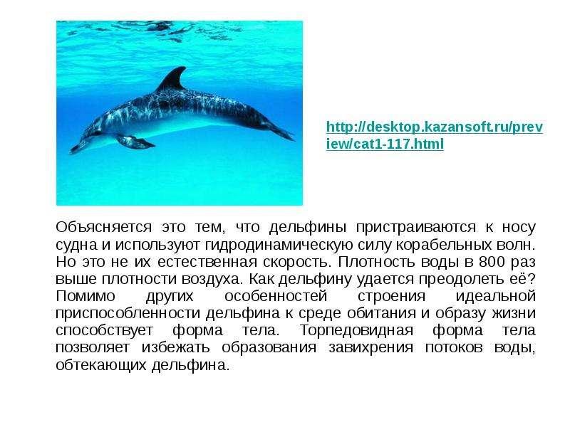 Объясняется это тем, что дельфины пристраиваются к носу судна и используют гидродинамическую силу ко