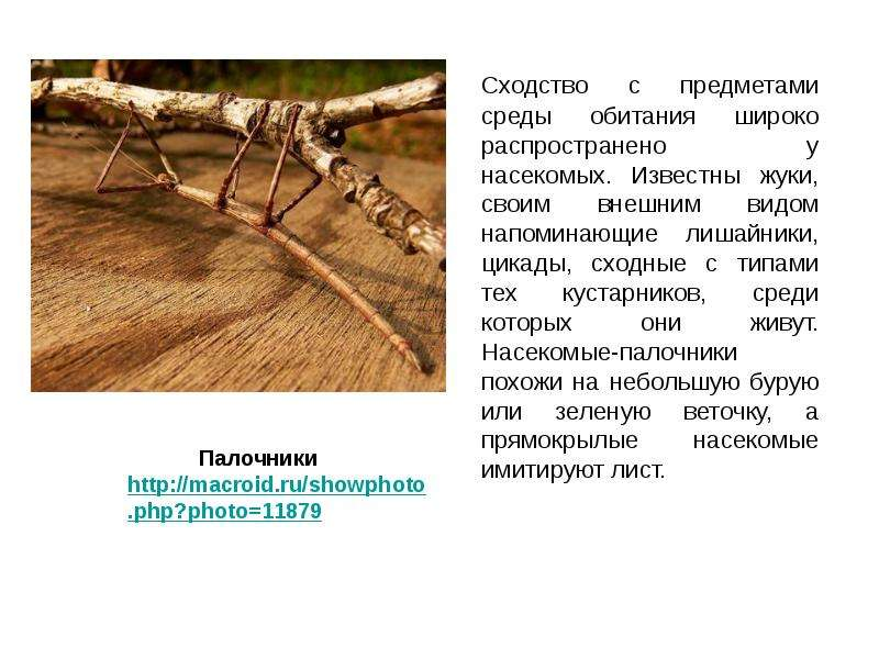 Сходство с предметами среды обитания широко распространено у насекомых. Известны жуки, своим внешним
