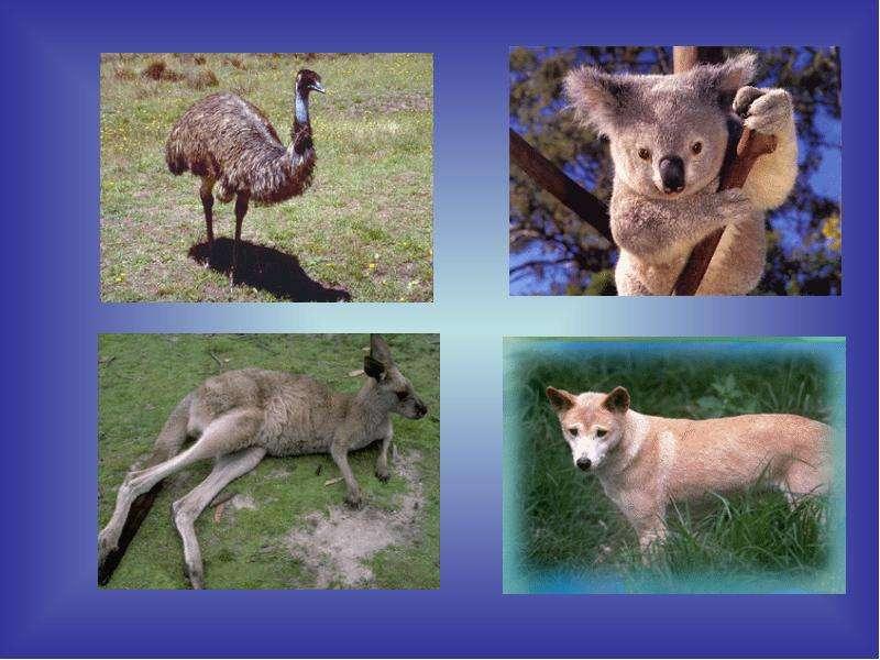 Географическое положение Австралии. История открытия, слайд 5