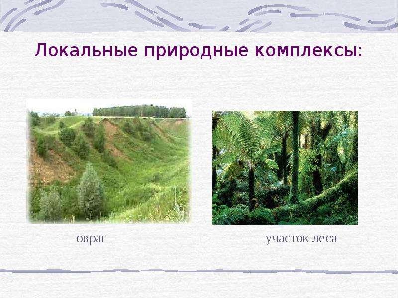 Локальные природные комплексы: