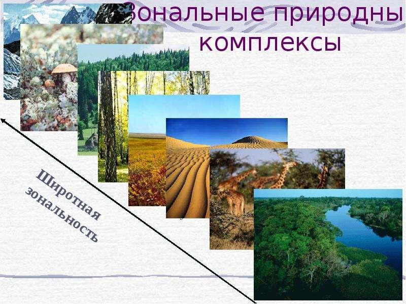 Зональные природные комплексы