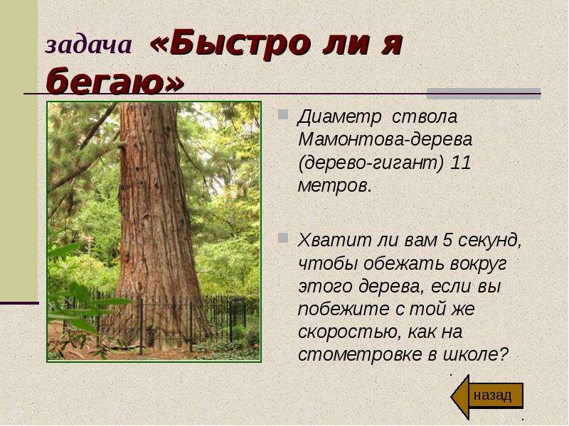 задача «Быстро ли я бегаю» Диаметр ствола Мамонтова-дерева (дерево-гигант) 11 метров. Хватит ли вам