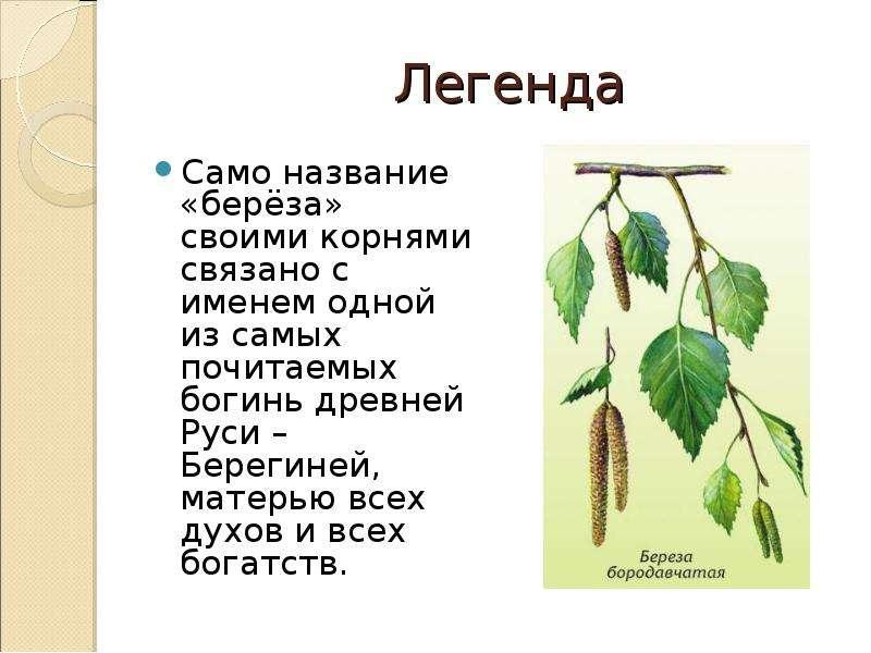 кафе береза картинка и краткое описание кулич растительном масле