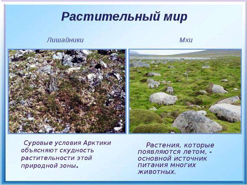 Растения, которые появляются летом, - основной источник питания многих животных. Растения, которые п