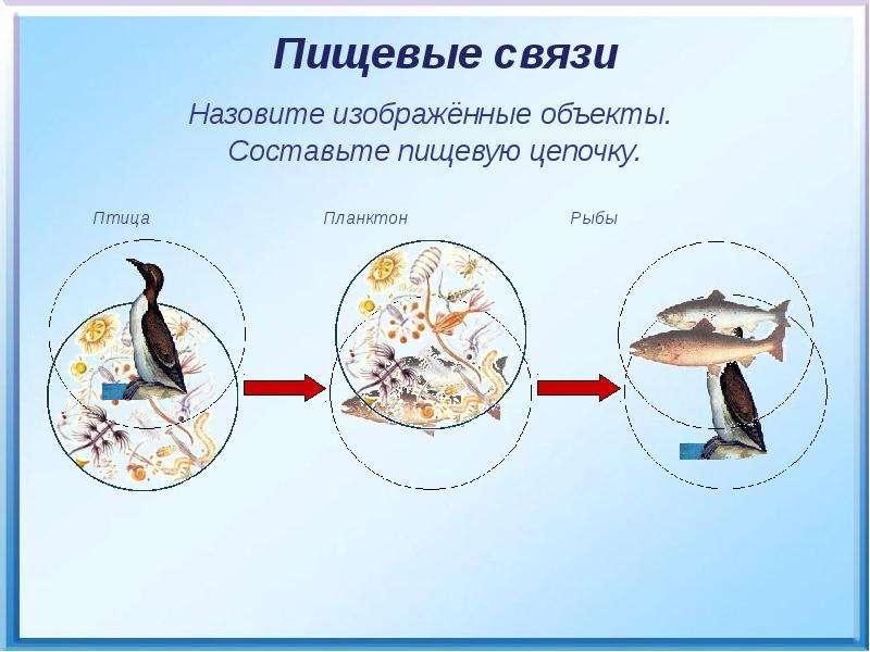 Птица Планктон Рыбы Птица Планктон Рыбы