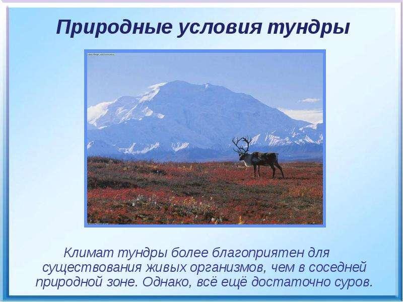 Климат тундры более благоприятен для существования живых организмов, чем в соседней природной зоне.