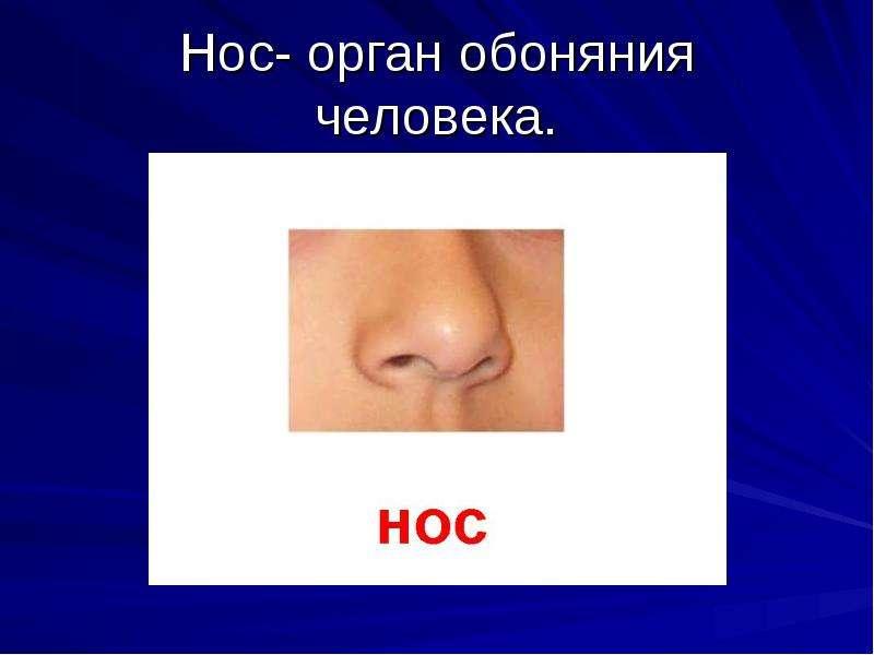 зачем человеку нос картинки своем