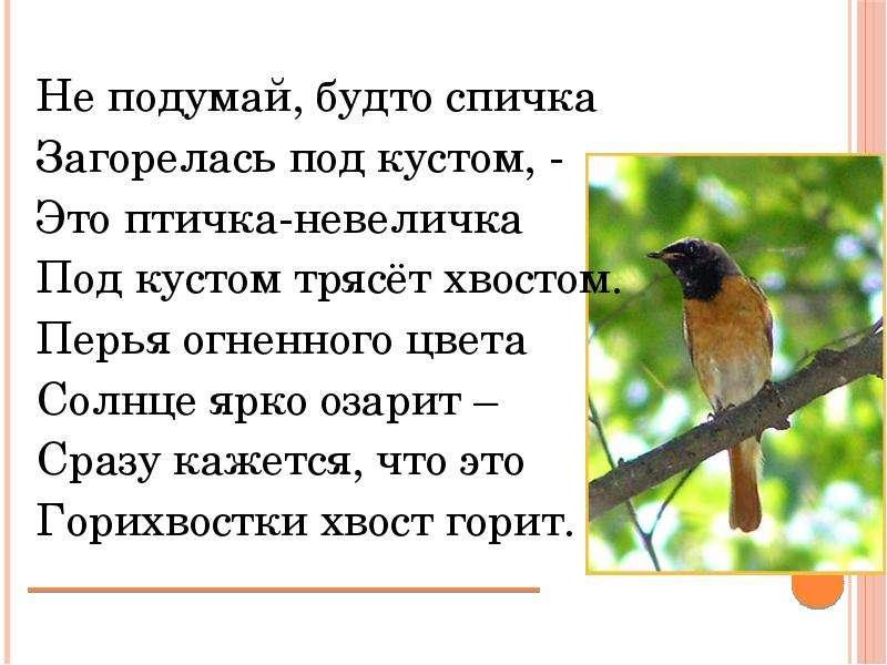 Не подумай, будто спичка Загорелась под кустом, - Это птичка-невеличка Под кустом трясёт хвостом. Пе