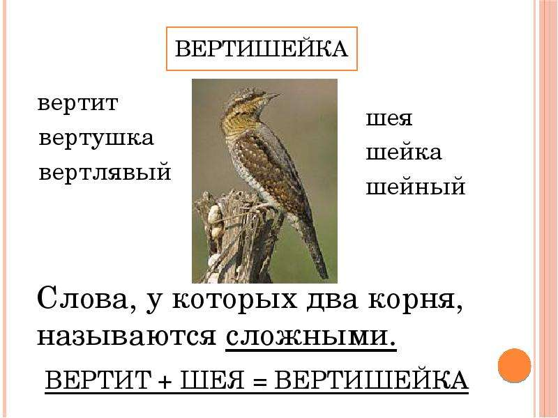 Вертишейка вертит вертушка вертлявый