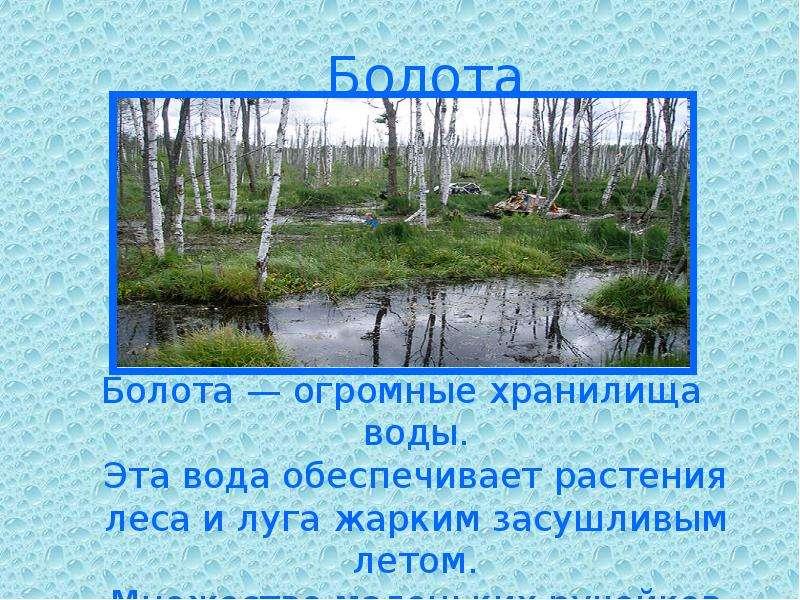 Болота Болота — огромные хранилища воды. Эта вода обеспечивает растения леса и луга жарким засушливы