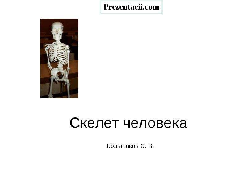 Презентация СКЕЛЕТ ЧЕЛОВЕКА
