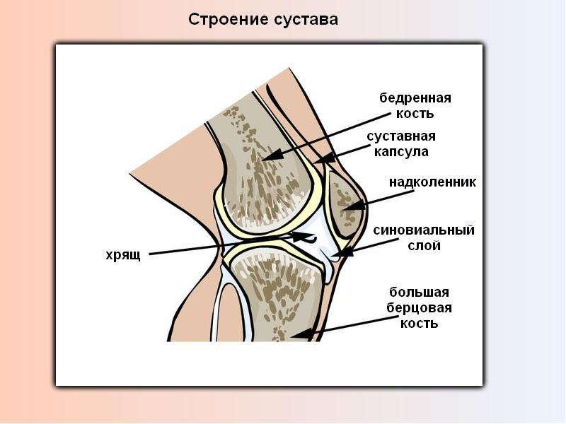 СКЕЛЕТ ЧЕЛОВЕКА, слайд 7