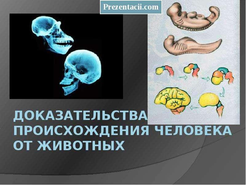 Доказательства происхождения человека