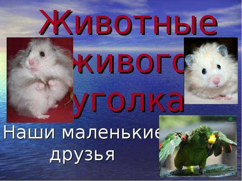 Животные живого уголка (2 класс)