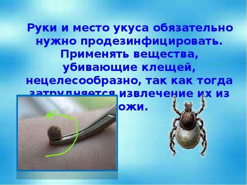 Руки и место укуса обязательно нужно продезинфицировать. Применять вещества, убивающие клещей, нецел