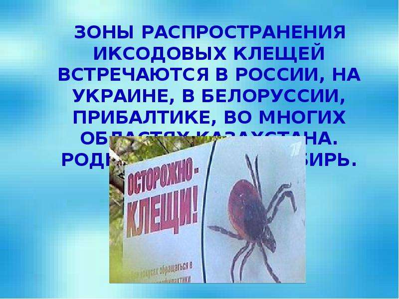 Зоны распространения иксодовых клещей встречаются в России, на Украине, в Белоруссии, Прибалтике, во